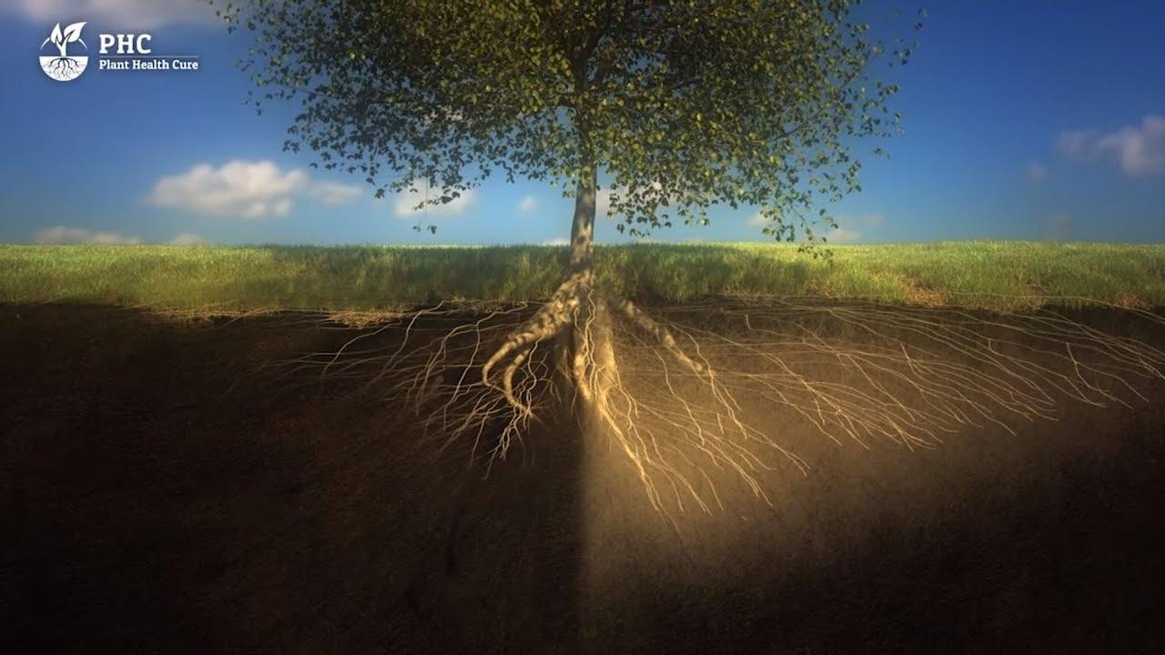 Soil Fertility: 16 Methods to Understand | EcoFarming Daily