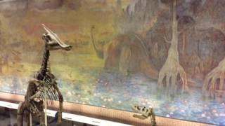 видео Палеонтологический музей, Москва. Адрес, режим работы, цены на билеты. Гостиницы рядом, как добраться – Туристер.Ру