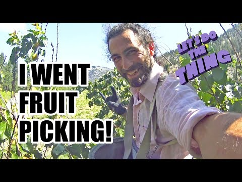 CHERRY PICKER! Fruit Picking Job In Canada - Working Winery Vacation