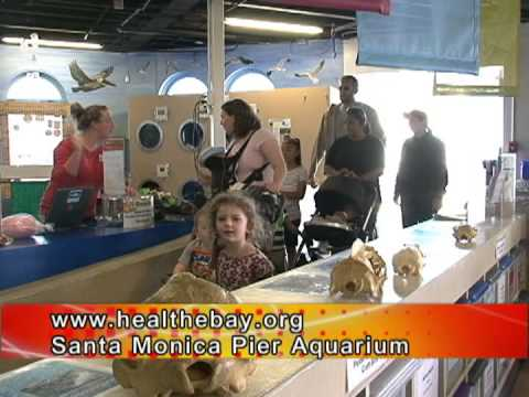 Bell Tsou visits The Santa Monica Pier Aquarium