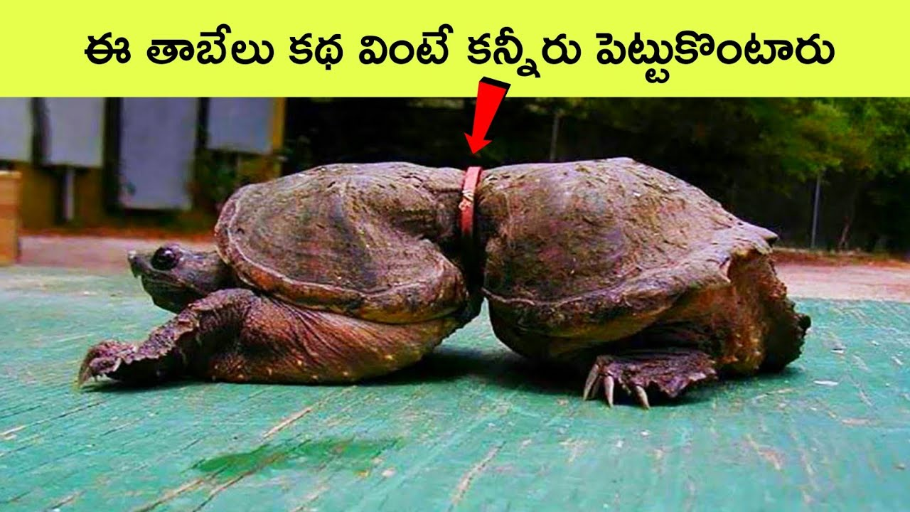 Top 12 Interesting facts Telugu | Google Accidentally Sold Google.com domain To A Man | BMC facts