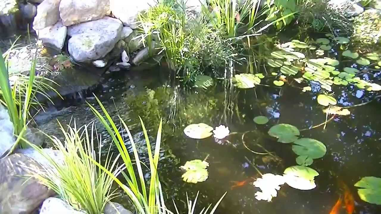 Lily Pad Flower On The Pond Youtube