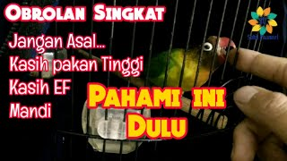 Download lagu Tahap Awal Dalam Proses Setting Lovebird Betina Single Fighter