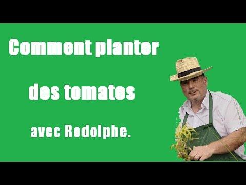 Comment planter des tomates.Tuto,vidéo,jardinage Le jardin ...