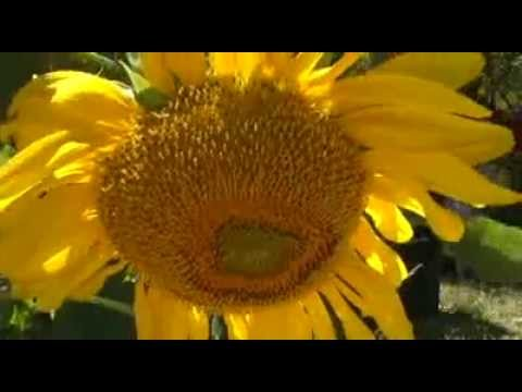 Deuter   Flowers Of The Amazon  Free MP3 Download2