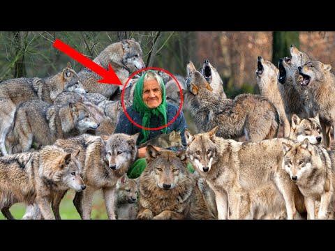 Старушка спасла и приютила стаю волков у себя в сарае... И вот что произошло дальше...