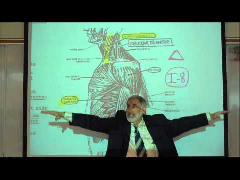 ANATOMY; MUSCLES OF THE SHOULDER & UPPER ARM by Professor Fink
