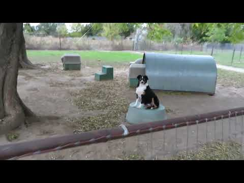 Take a Tour of Fifteen Acre Farms Australian Shepherds at www.fifteenacrefarms.com