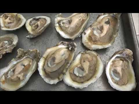 Clean and Cook Oysters Perfectly