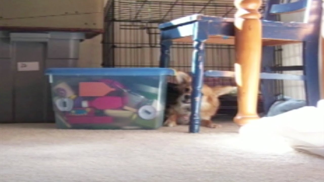 Awesome Dog Cage Escape!