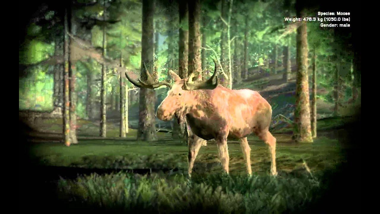 Piebald Moose Youtube