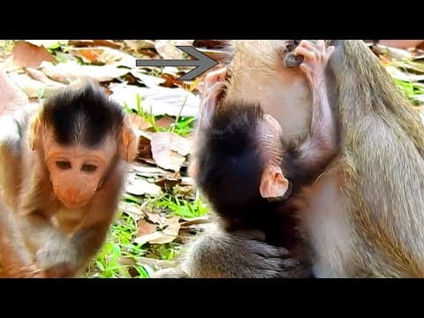 Barbie Get Angry with Mom,& Slap Mum , Why Blacky Doesn't Let Her New Baby Go & Walk?