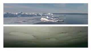 La circulation océanique thumbnail