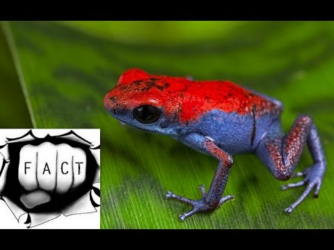 The 10 Most Poisonous Animals in the World