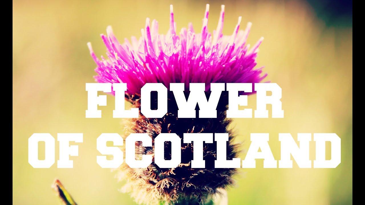 Scottish Music Flower Of Scotland Youtube