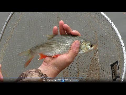 рязань рыбалка во льгово