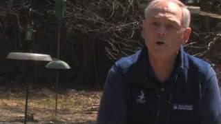 Wild Bird Food : What Do Blue Jays Eat?