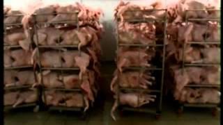Экспорт российской мясопродукции