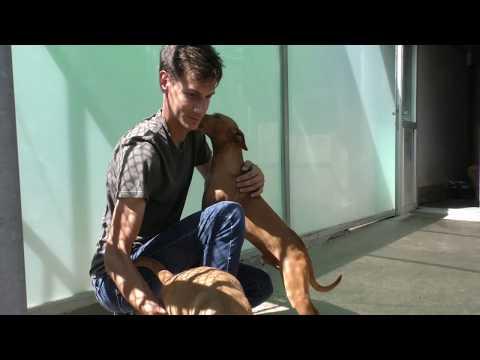 170 Perros Y 70 Gatos Abandonados A La Espera De Un Dueño En El CIAAM De Colmenar Viejo