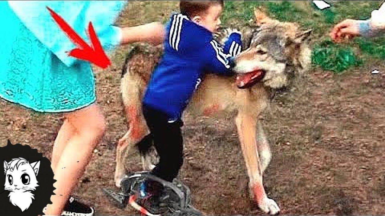 Вот что Сделал этот Волк с Пацаном Потерявшемся в Лесу [Белый кот]