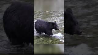 Анекдот Прикол от Медведя Приколы Fishing PRO Темур Тик Ток Shorts