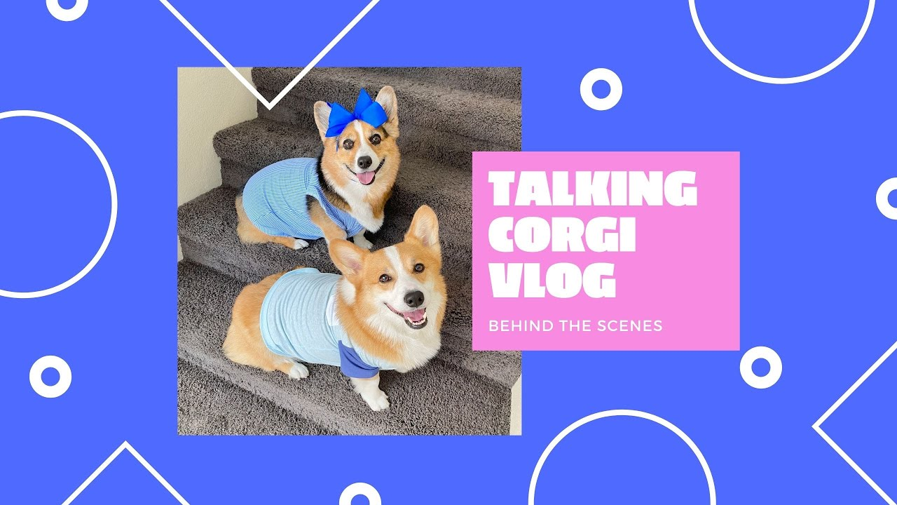How Talking Dogs Produce a VIRAL Video!