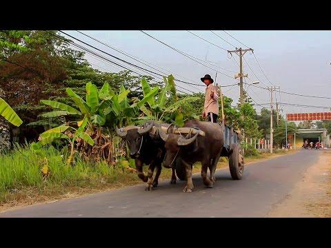 Vietnam || Cu Chi District  Discovery || Ho Chi Minh City