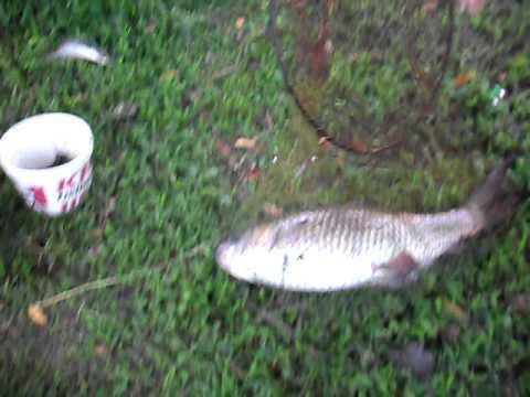 ตกปลาเชียงราย กุ้ง-รัญ-จิ๊บ 8.22 ก.ก.AVI