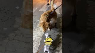 검정콩 vs 대왕콩