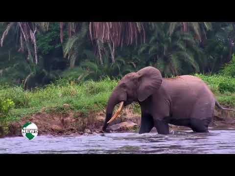 CONGO BASIN AFRICAN ELEPHANTS POPULATIONS