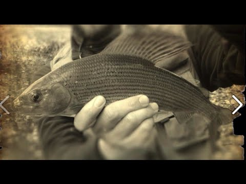 How To Fly Fish For Big Grayling - The River Avon Chalk Stream