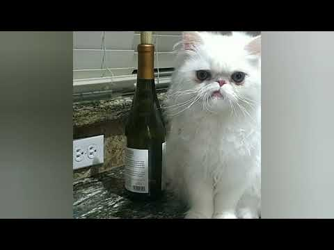 Sebastian & Catsby Cats Of Instagram - Terry M Barnes
