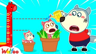 Baby Jenny wants to be higher - Wolfoo kids stories about baby | Wolfoo channel