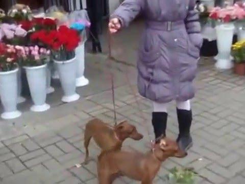 алексеевка белгородская область секс знакомства