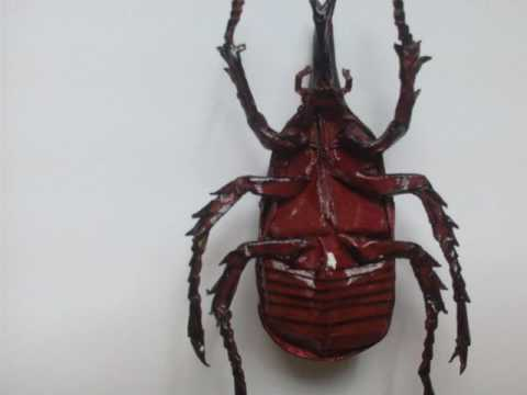 My insects paper art