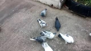 Güvercinlerimizi Saldık