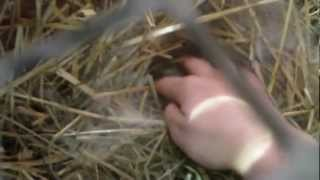 Baby Bunny Care: helping your rabbit have babies