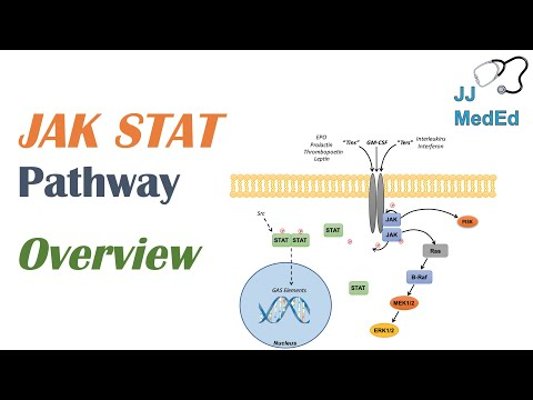 JAK-STAT Signaling Pathway