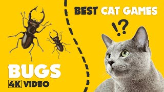 CAT GAMES bugs on screen || ONLY for the best cats 1 HOUR 4K