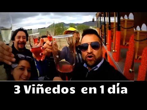 Los 3 viñedos de Querétaro que debes conocer!