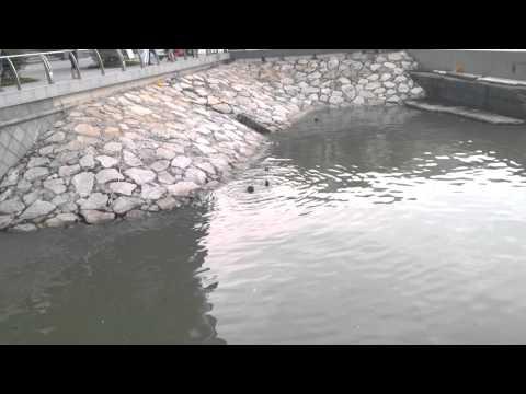 Otters at One Marina Boulevard, Marina Bay Area 8th June 2015