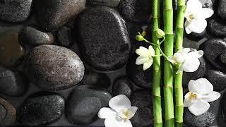 Lockdown Relaxing Music 24/7, Healing, Reiki Music, Stress Relief, Meditation, Spa, Zen, Sleep Music