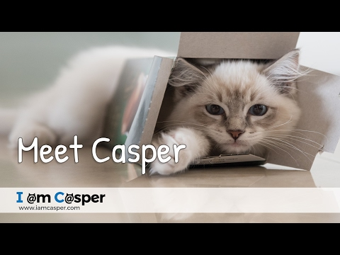 Meet Casper the beautiful ragdoll cat - introduction video