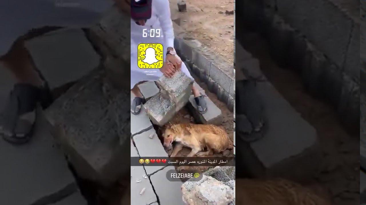لحظة إنقاذ مواطن لكلب علق بين الصخور في المدينة المنورة