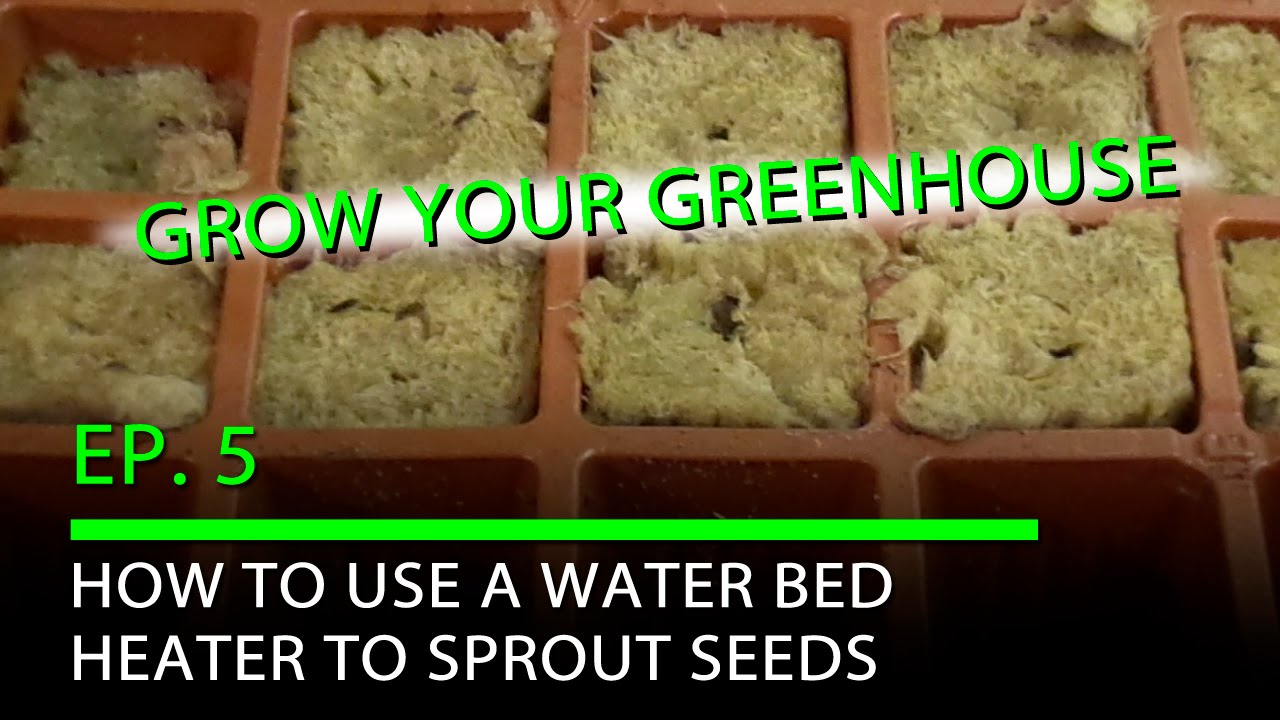 gyg ep 5 how to use a water bed heater to sprout seeds