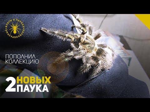 Видео: +2 новых паука (Обзор)