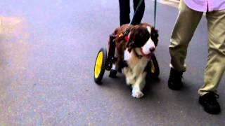 犬の車椅子・ネコの車椅子.