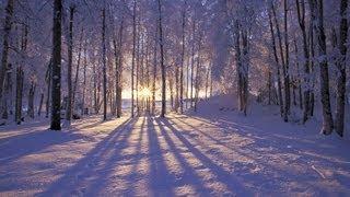 Приход зимы так скор и неизбежен...   Раймонд Паулс. Элегия (Бабочки на снегу.)