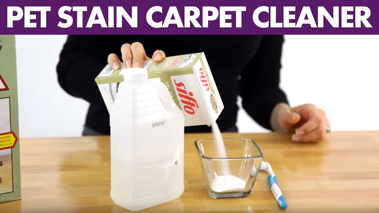 Pet Stain Carpet Cleaner Day 3 31