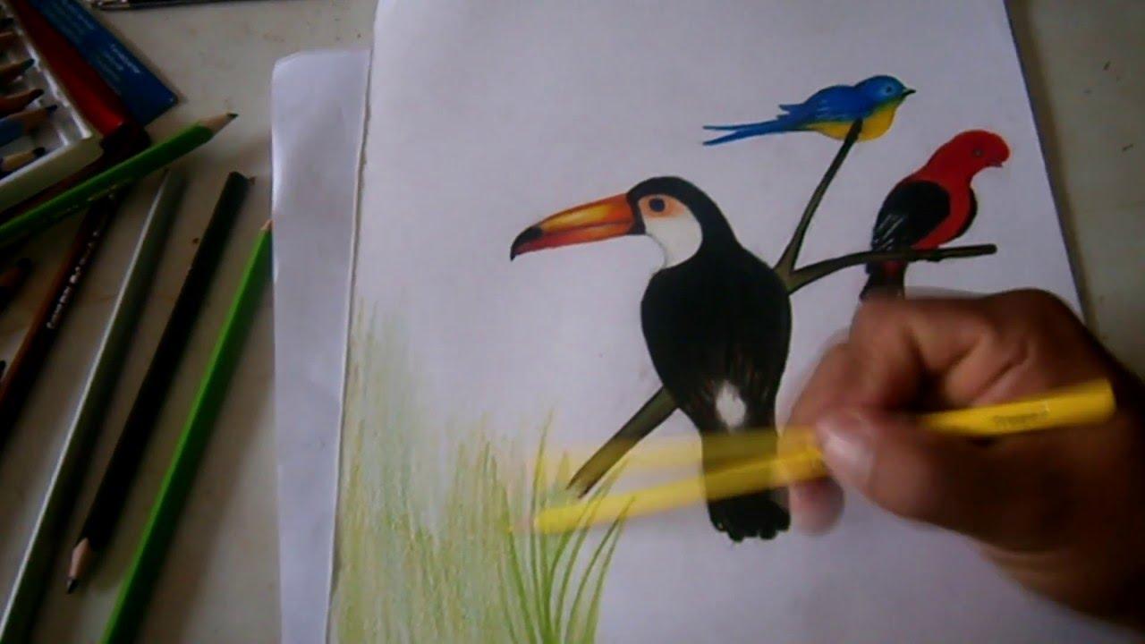 Como pintar un Tucán y un Pájaro con Lápiz a colores 2016 - YouTube